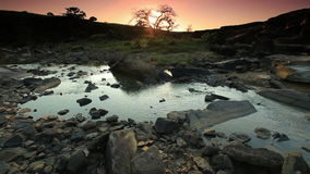 Stream with a tree and sun coming up stock video footage