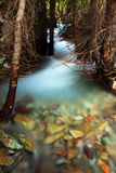 Stream Through Trees Stock Photography