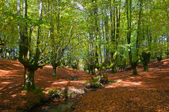 Stream through the trees in Otzarreta forest, in a Royalty Free Stock Images