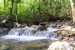 Stream Among The Trees. Royalty Free Stock Photo