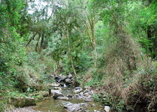 Stream in tropical forest Stock Photos