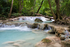 Stream in the Tropical Forest Royalty Free Stock Photo