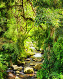 Stream in a tropical forest Royalty Free Stock Images
