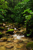 Stream in a tropical forest. Stream in the Central American rainforest Stock Photo