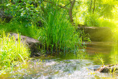 Stream in the tropical forest Royalty Free Stock Images