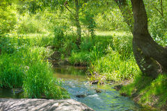 Stream in the tropical forest Royalty Free Stock Photos