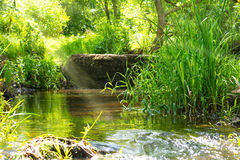 Stream in the tropical forest Stock Photography