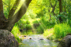 Stream in the tropical forest Stock Photos