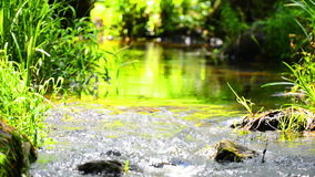 Stream in the tropical forest stock footage