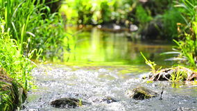 Stream in the tropical forest. Environment sunny landscape with zoom out stock footage