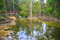Stream in the tropical forest. Stock Photography