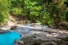 Stream in the tropical forest Stock Images