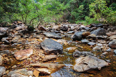 Stream in the tropical jungles Stock Image