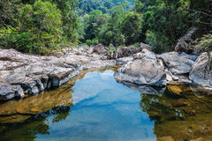 Stream in the tropical jungles Royalty Free Stock Image