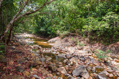 Stream in the tropical jungles Stock Images