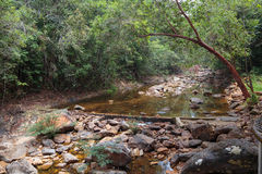 Stream in the tropical jungles Stock Photos