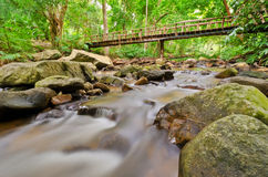 Stream in tropical rain forests Stock Image