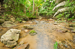 Stream in tropical rain forests Stock Photography