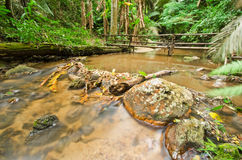 Stream in tropical rain forests Royalty Free Stock Photos