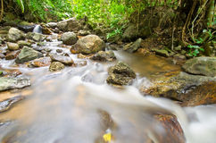 Stream in tropical rain forests Royalty Free Stock Photo