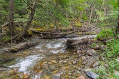 Stream in Ushuaia Forest. Glacier Martial trekking, Argentina royalty free stock image