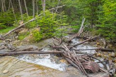 Stream in Ushuaia Forest. Glacier Martial trekking, Argentina stock photo