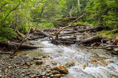 Stream in Ushuaia Forest. Glacier Martial trekking, Argentina royalty free stock photos