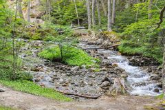 Stream in Ushuaia Forest. Glacier Martial trekking, Argentina royalty free stock photography