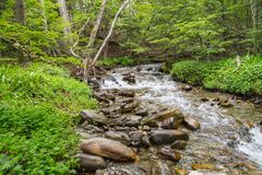 Stream in Ushuaia Forest. Glacier Martial trekking, Argentina stock image