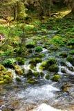 Stream in the Valley Koscieliska. Small stream flowing among mosses in the Valley Kościeliska (Tatra Royalty Free Stock Photography