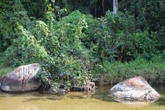 A stream among the vegetation. royalty free stock images