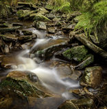 Stream of water. Slow movement of stream of water surrounded by lush green foliage Stock Image