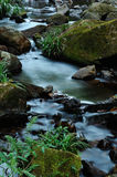 Stream water flows. Water flows along a little stream Stock Images