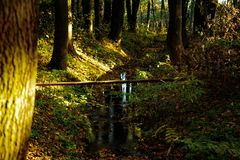 A Stream of Water in the Forest. In Poland stock photos