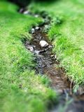 Stream Water in Green Meadow Royalty Free Stock Photos