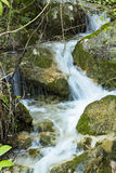 The stream. Stream of water and small waterfalls Royalty Free Stock Image