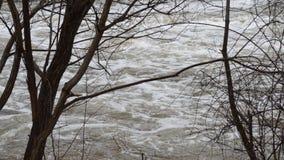 Stream of water stock video