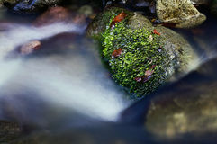 Stream of water. Stock Image