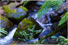Stream. Of water in Warburton Stock Photography