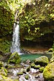 Stream with Waterfall in Lush Jungle Stock Photo