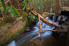 Stream and waterfalls in the mountains Stock Photography