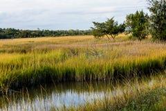 Stream Through Wetland Marsh Royalty Free Stock Photos