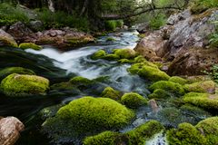 Stream with white water at fulufjallet nature reserve. In sweden stock photos