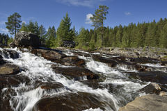 Stream with white water and pine trees in background. Picture from the North of Sweden stock photo