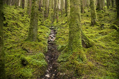 Stream in wild forest in Scotland Stock Photo