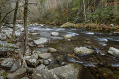 Stream Winding Through a Forest - Tennessee Royalty Free Stock Photography