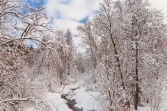 Stream in the winter forest. Tall trees bent over water royalty free stock photos