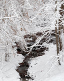 A stream in winter Royalty Free Stock Images