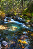 Stream in the wood. Royalty Free Stock Photos