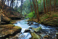 Stream in woods. In autumn with rocks and foliage Royalty Free Stock Image